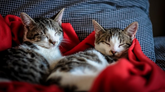 Two cats in bed.jpg