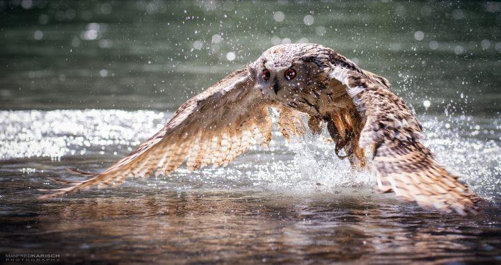 Wet Owl.jpg