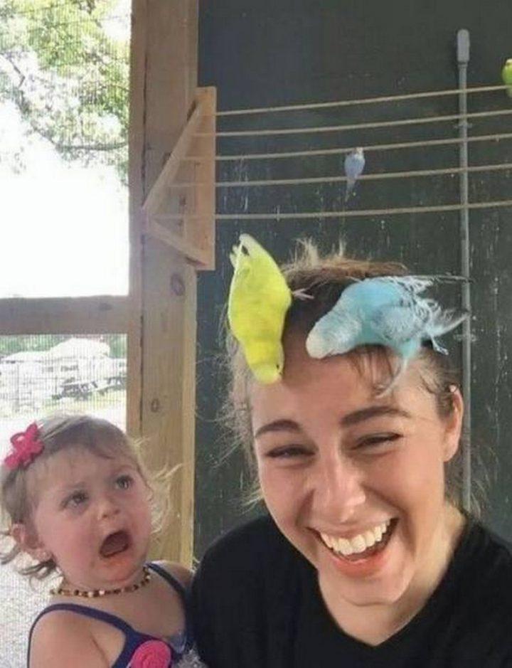 attack birds.jpg