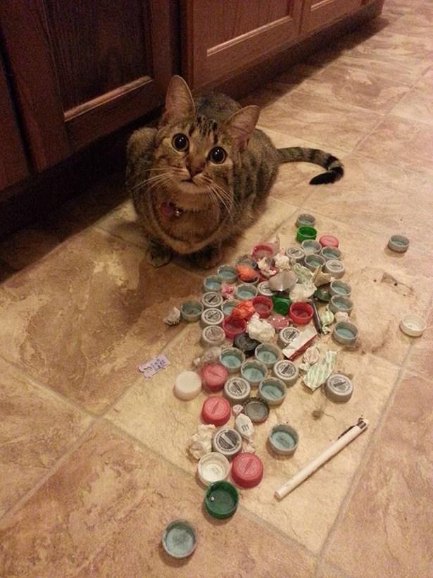 cat daily-wtf-002-04162016