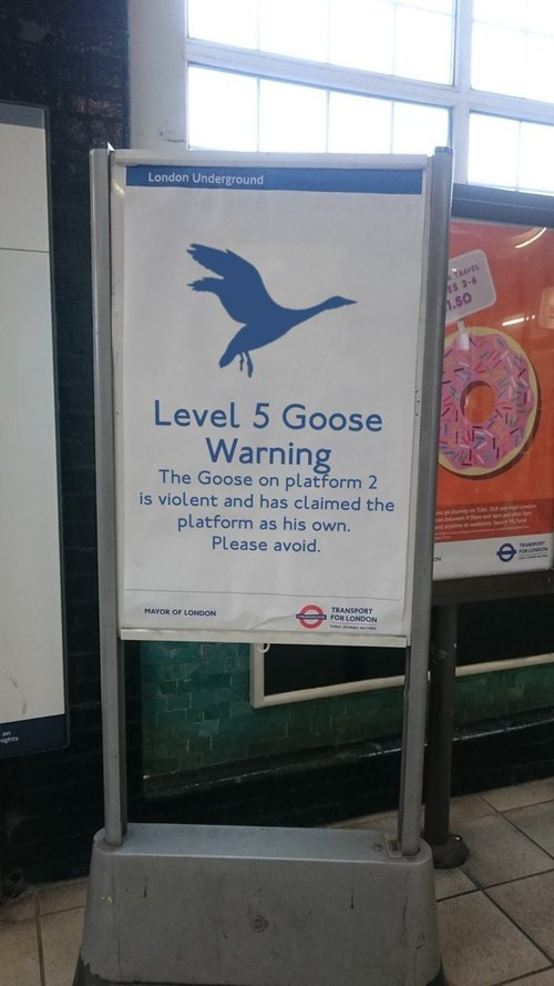 level 5 goose warning.jpg