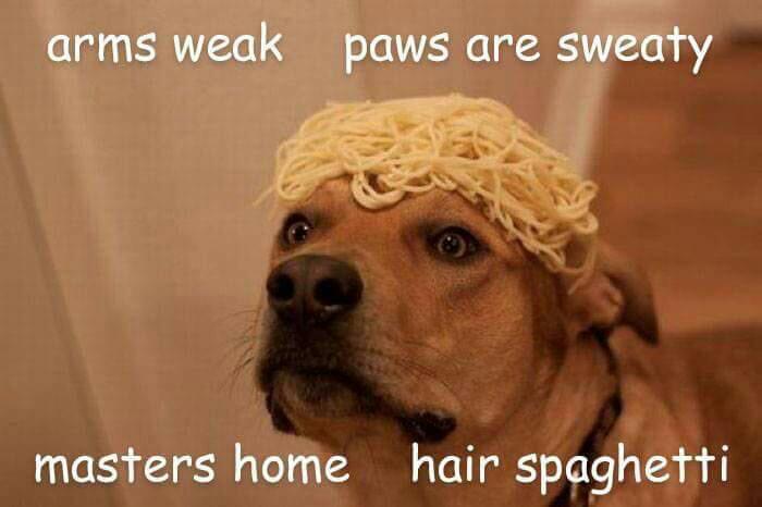 pasta dog rap.jpg