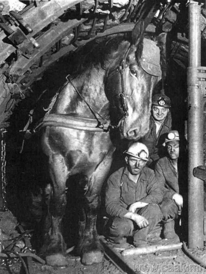 underground horse.jpg