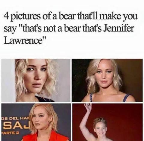 4 pictures of a bear.jpg