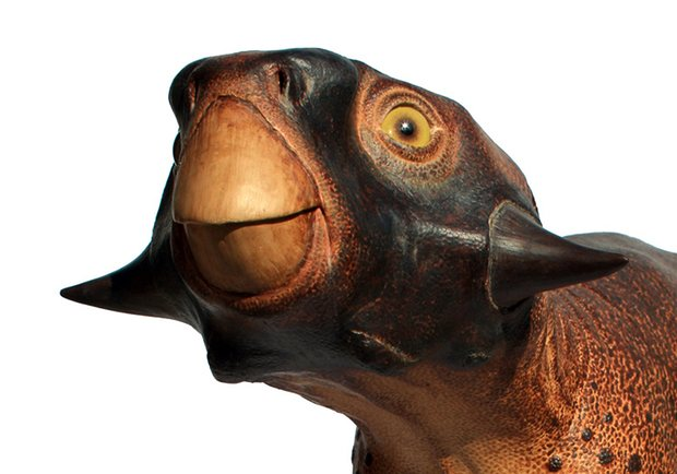 Hello! I'm a Psittacosaurus. Can I be your friend?!