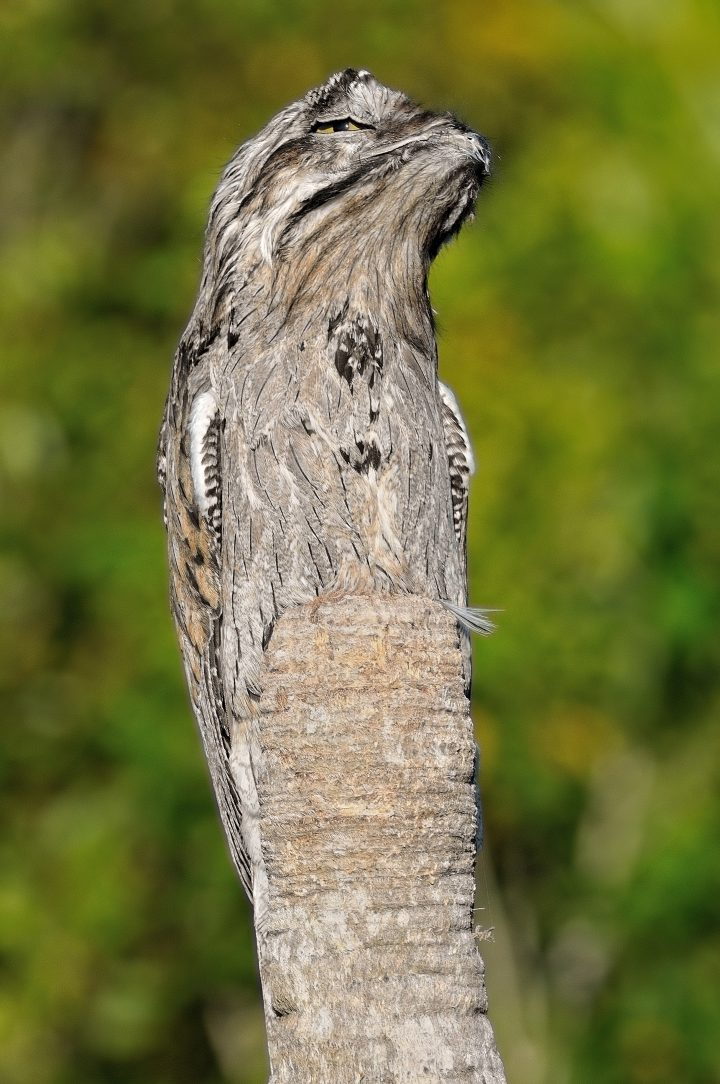 Hidden Owl.jpeg
