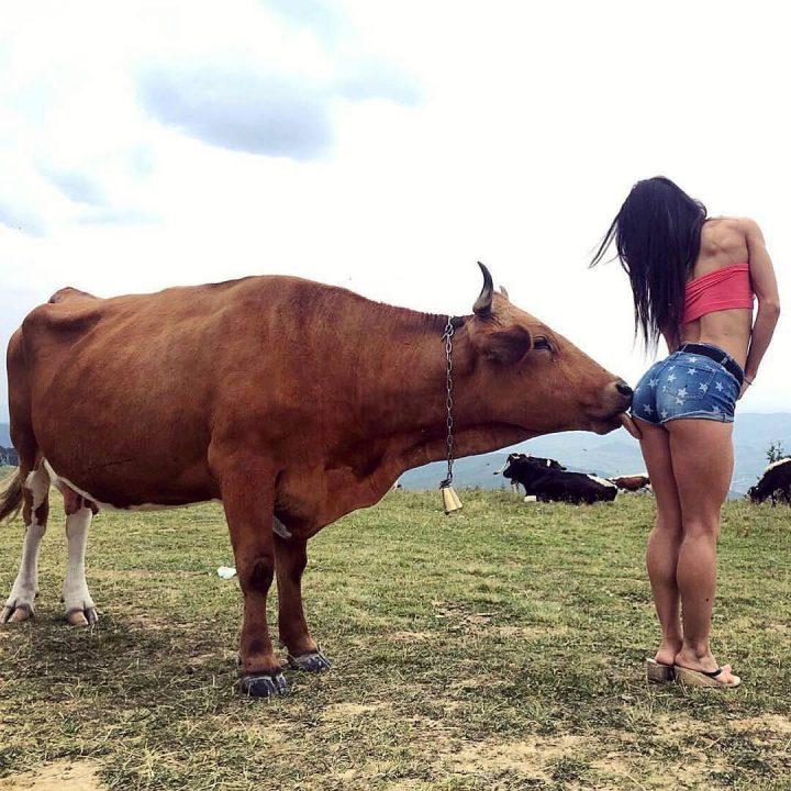 a cow licking a woman's butt.jpg