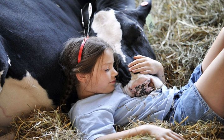 a girl and her cow