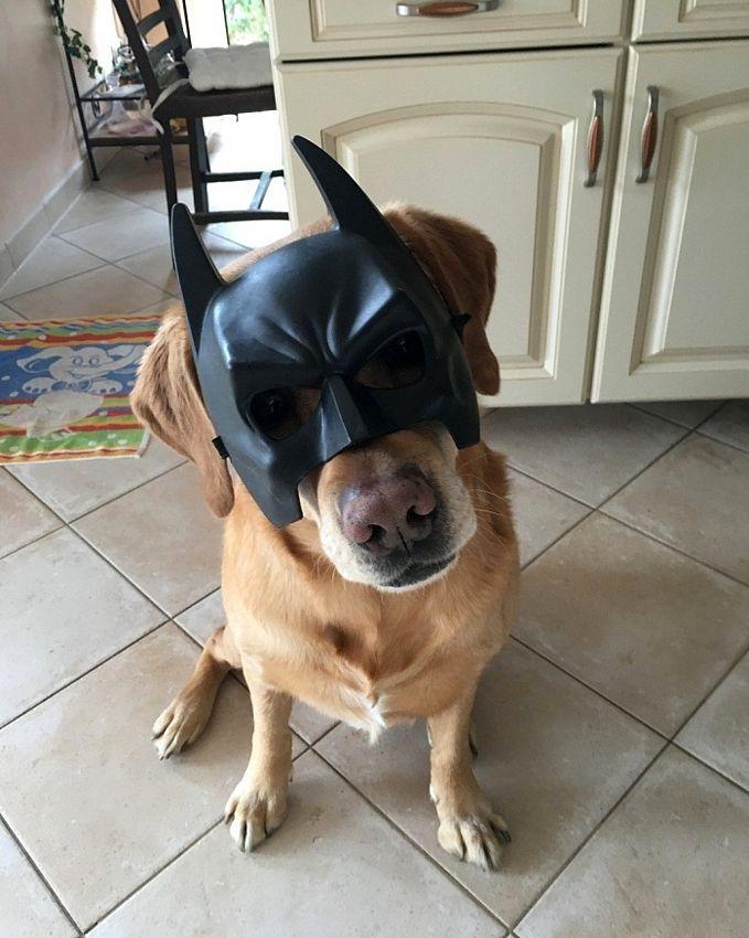 batdog.jpg