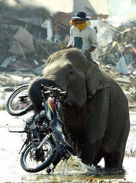 elephant-936239_541613862552164_1210848331_n