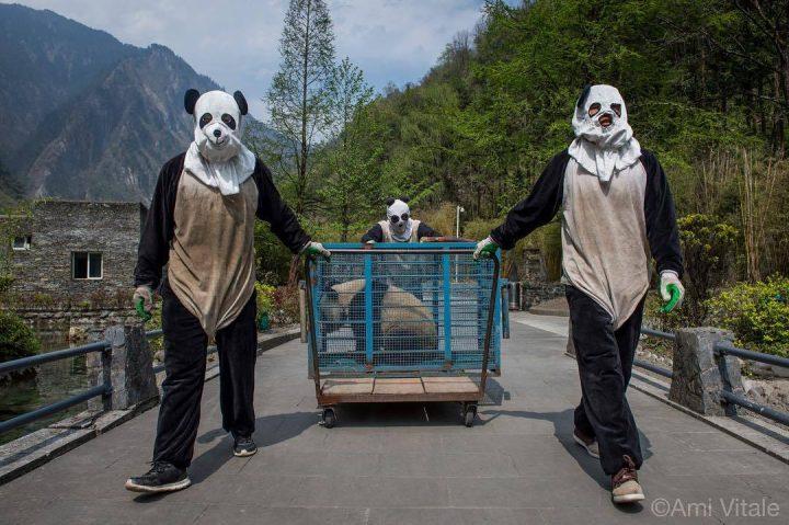 panda transporters.jpg