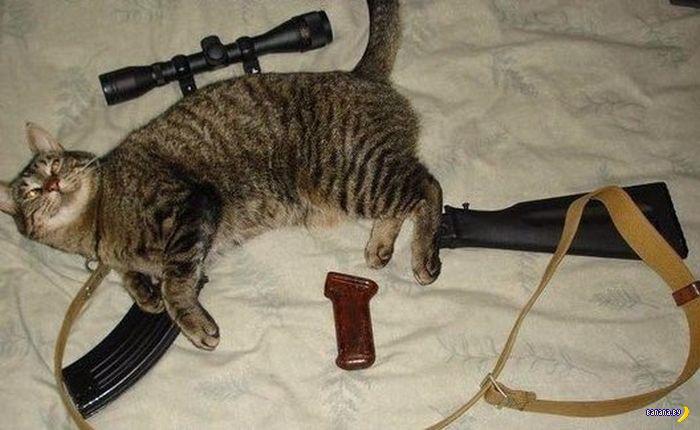 sniper cat.jpg