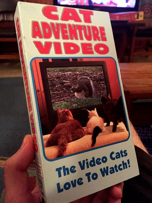 Cat Adventure Video.jpg
