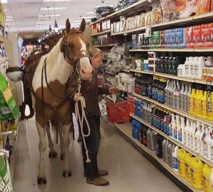 Shopping Horse.jpg