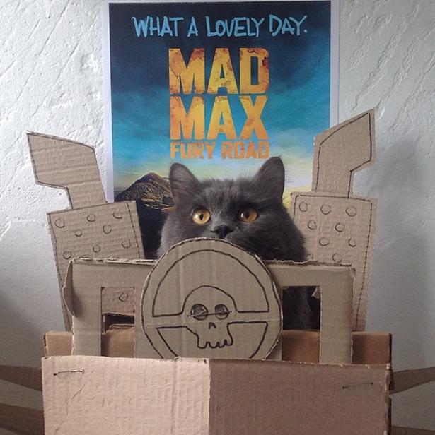 cat-daily-wtf-129-05202015
