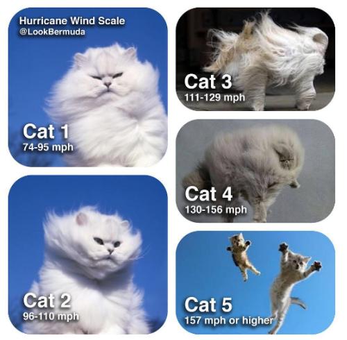 storm-cats