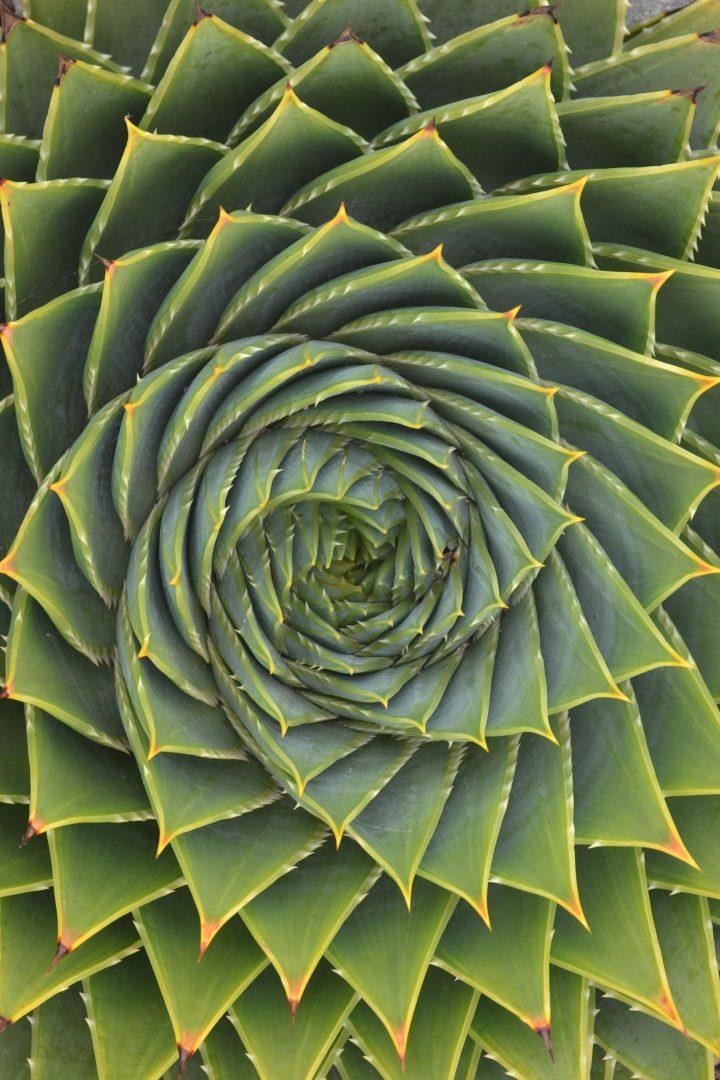 Mathmatical Cactus flower.jpg