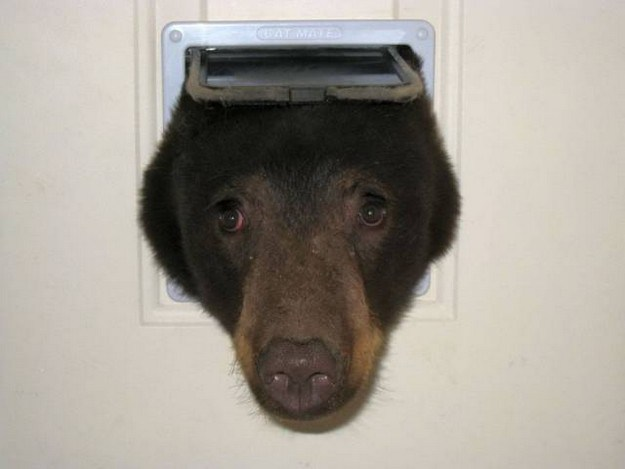 meanwhile-at-the-doggie-door_small