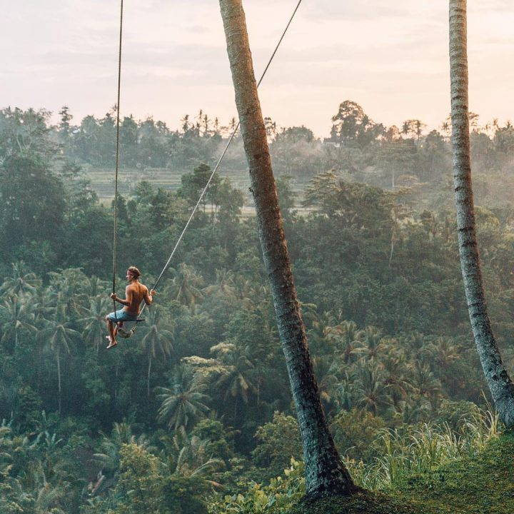 Palm Tree Swing