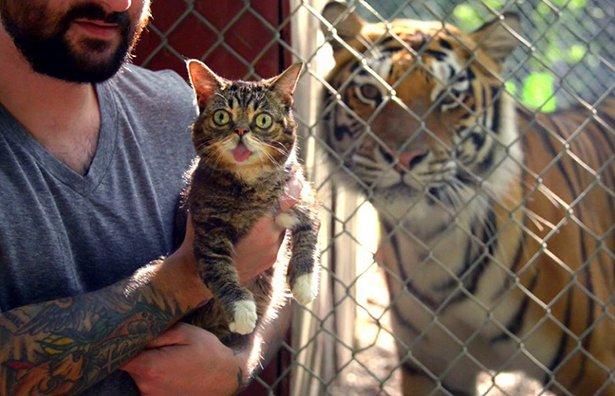 cat-wtf-sunday-032-08292014