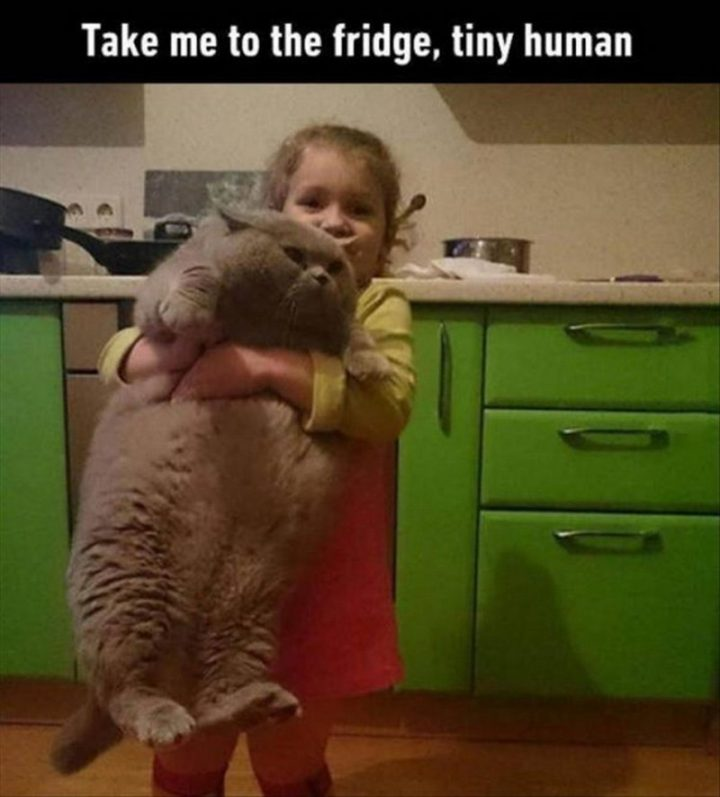 take me to the fridge, tiny human.jpg