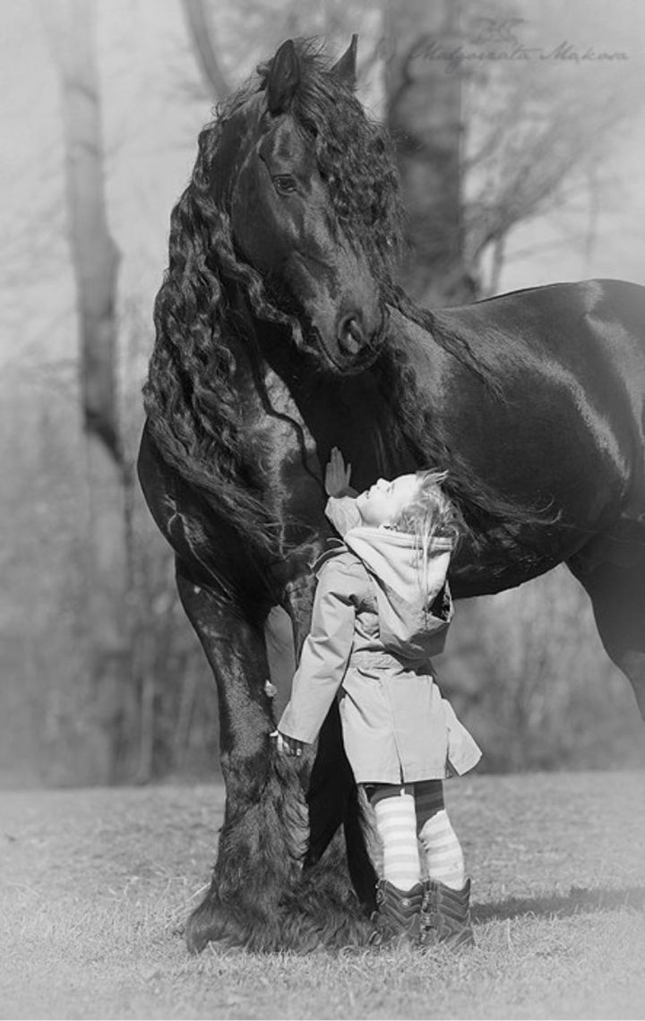 A horse and a girl.jpg