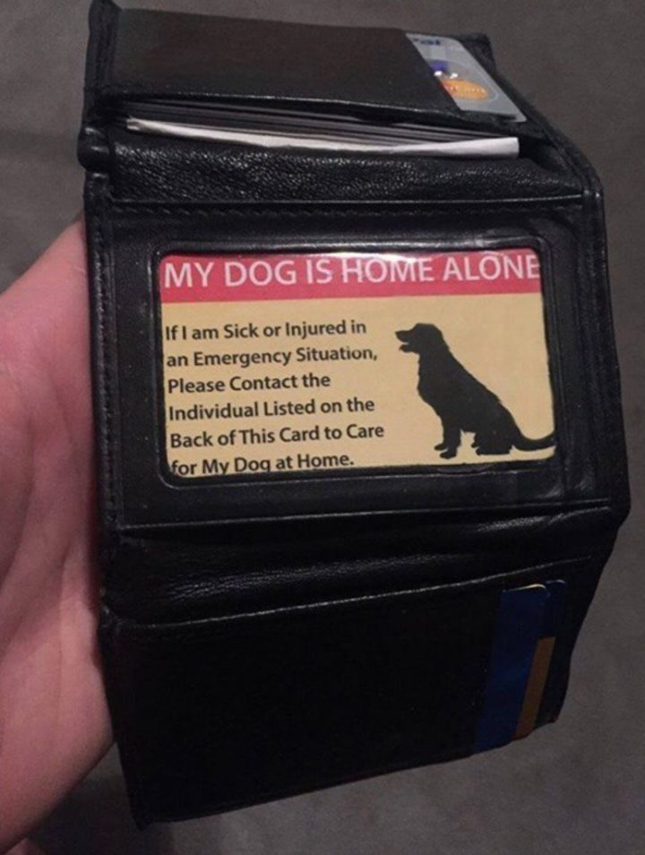 my dog is home alone