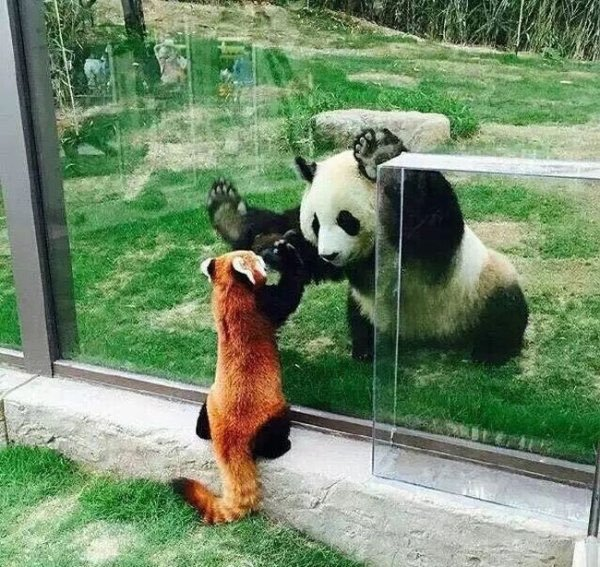 pandas of a different name.jpg