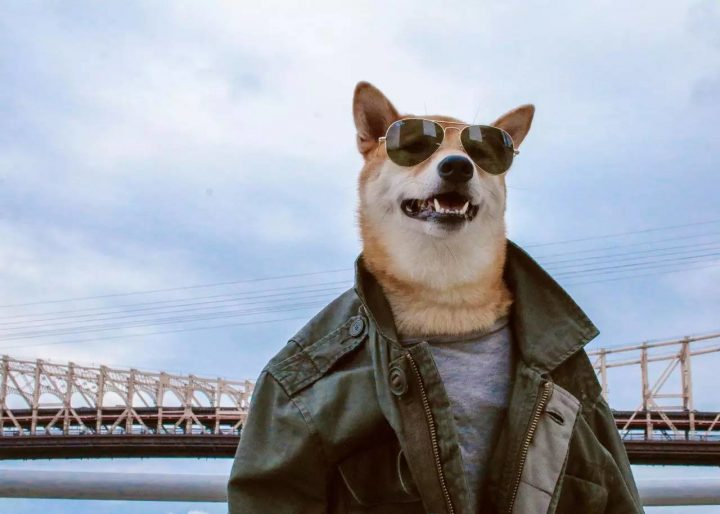 Top Gun Dog