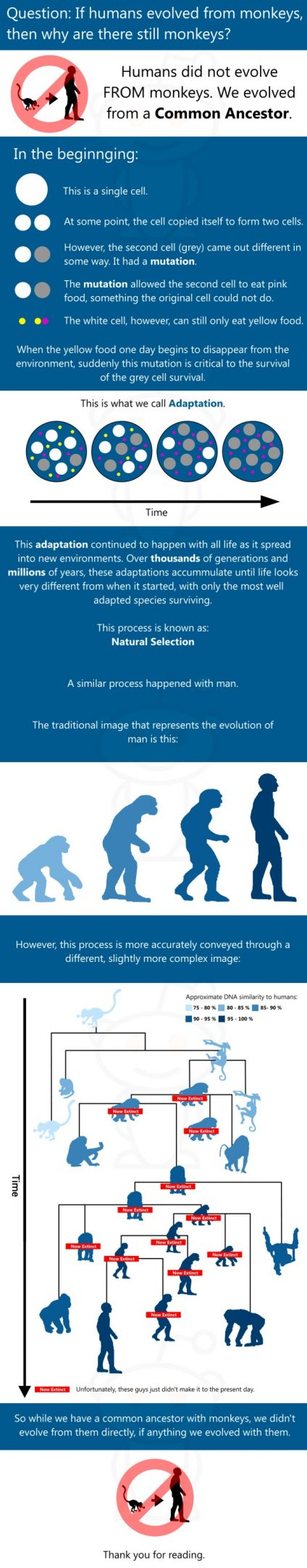If humans evolved from monkeys, why are there still monkeys