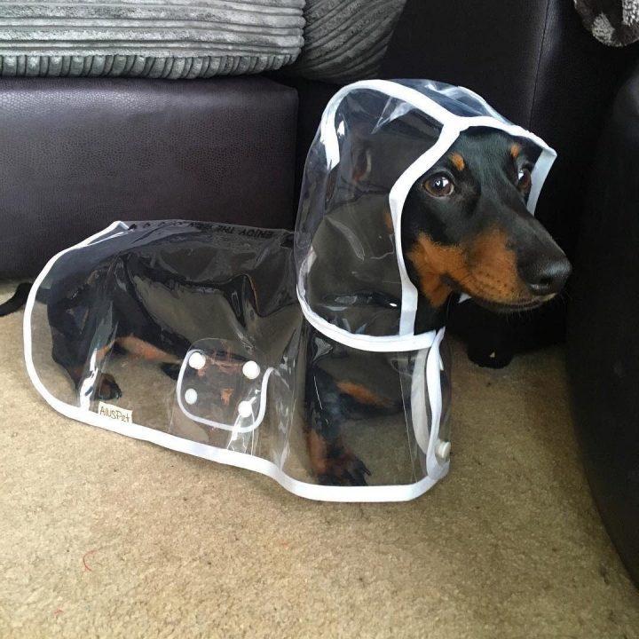 Poncho Doggy