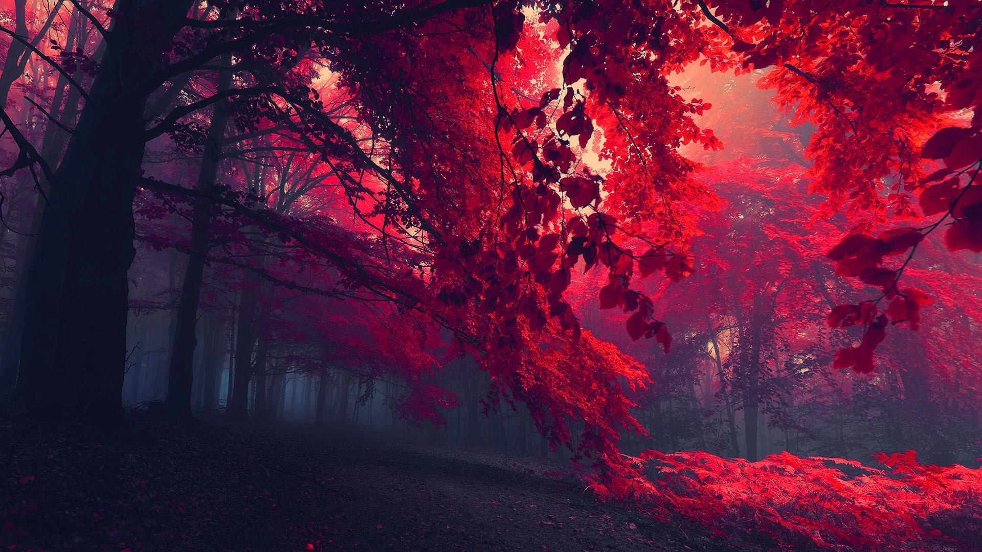 red leafs.jpg