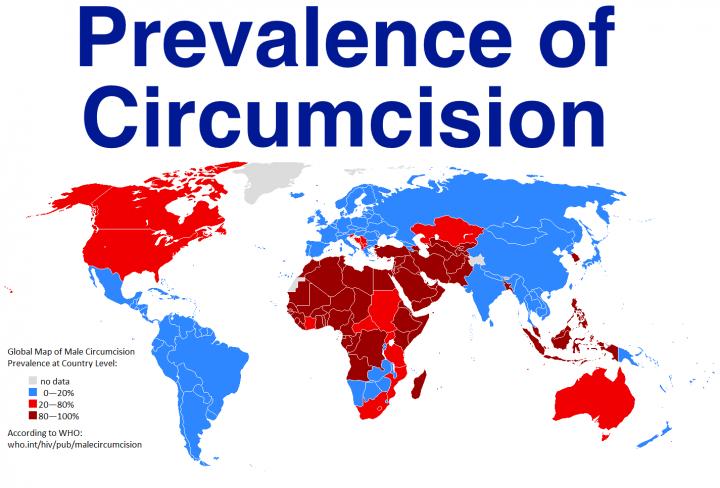 Circumcised Penis 75
