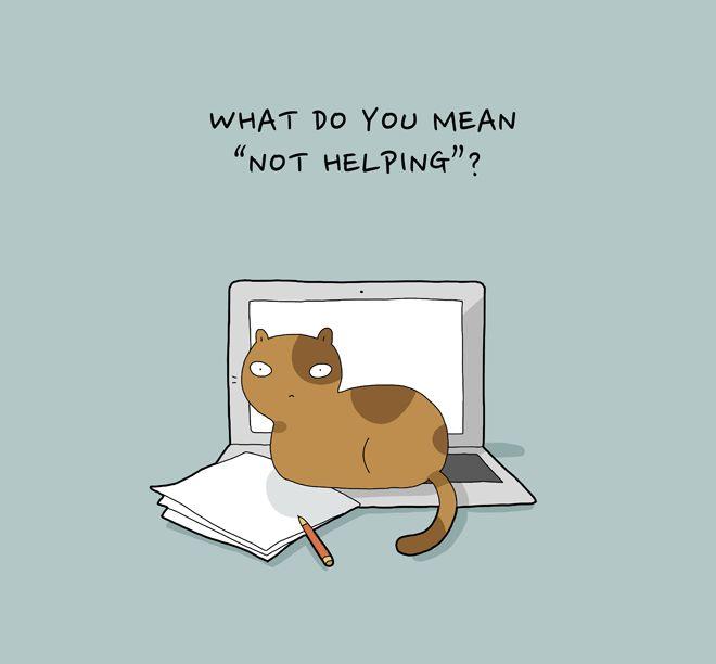 cats on a laptop.jpg