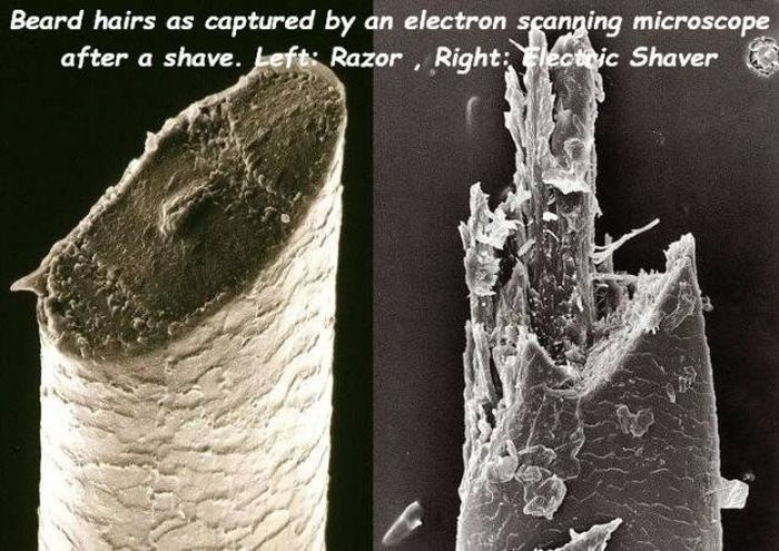 beard hairs under an electron scanning microscope