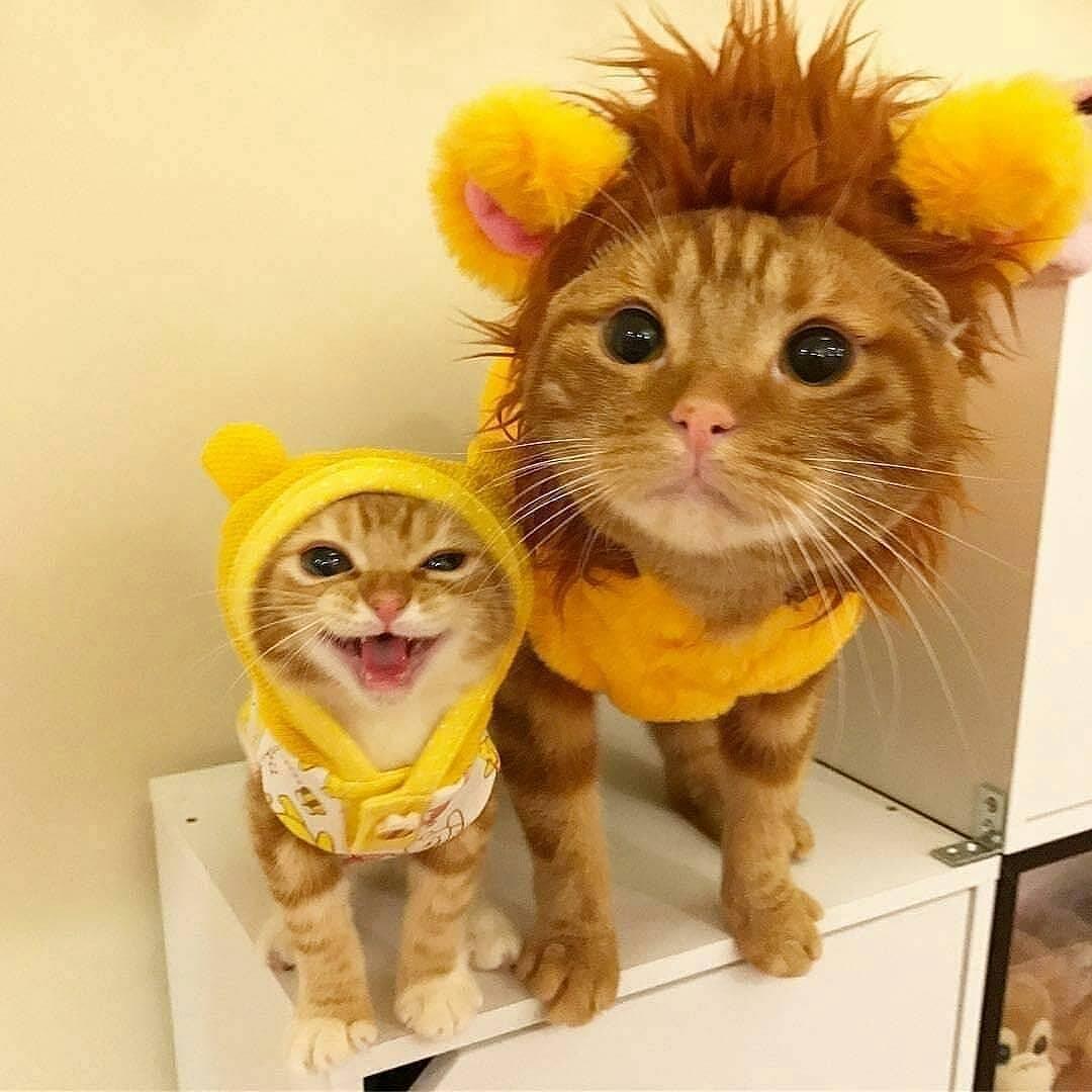 Costumed Kitties
