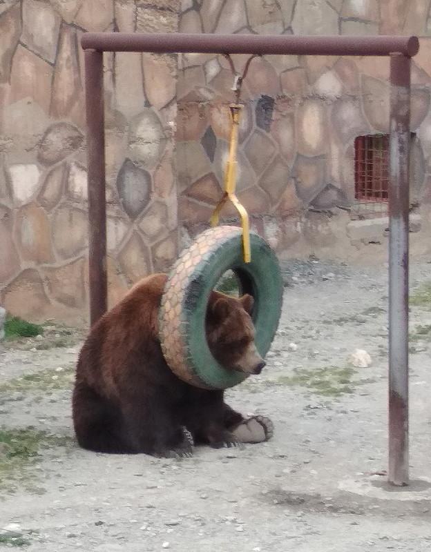 suicidal russian