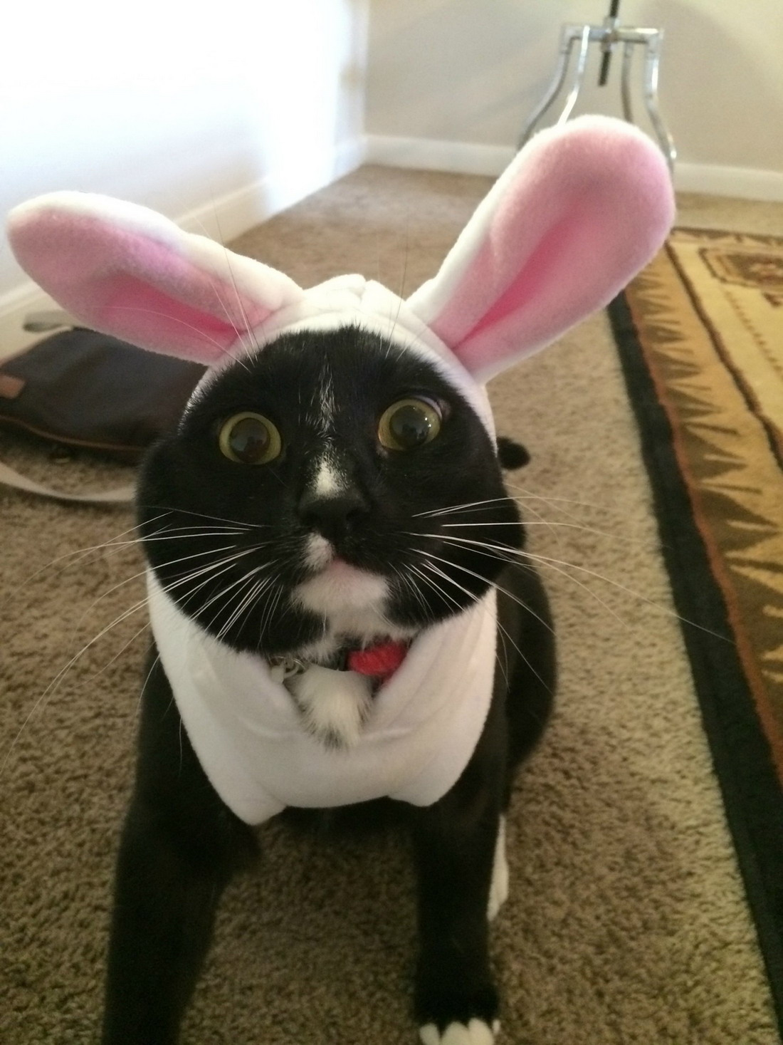 freaked out bunny cat.jpg