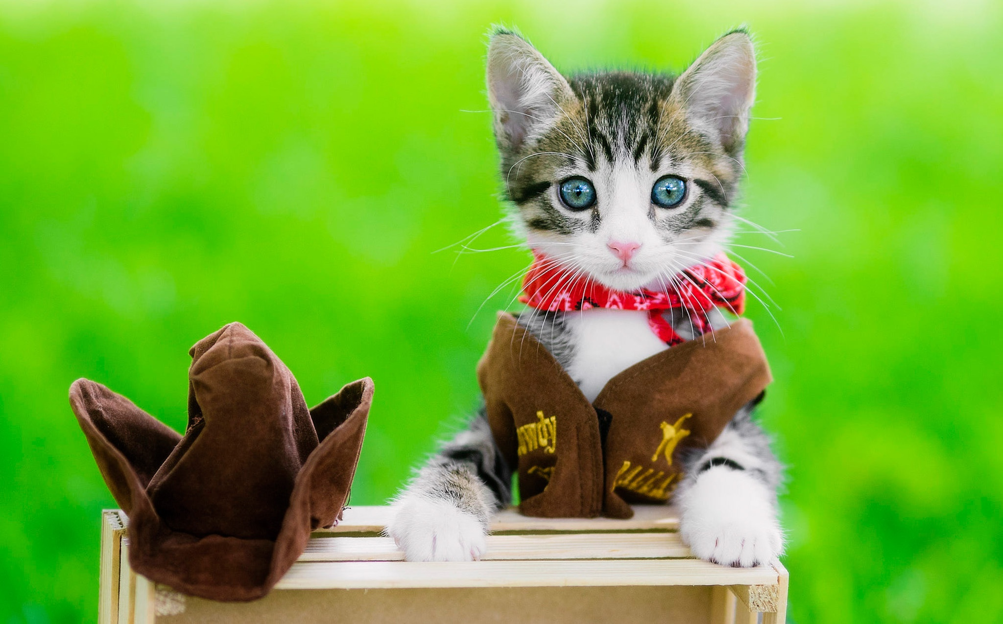 cowgirl cat.jpg