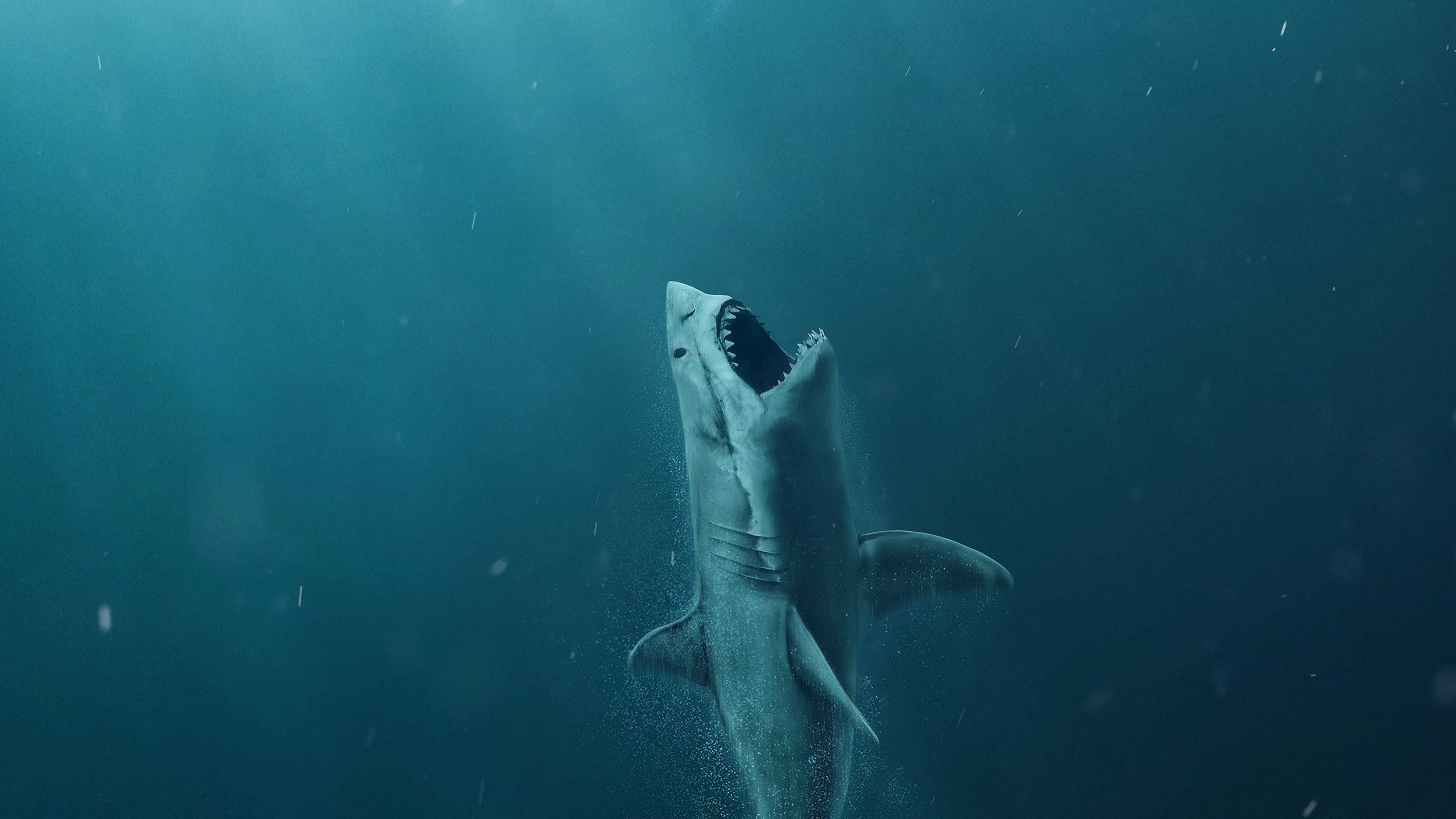 open shark.jpg