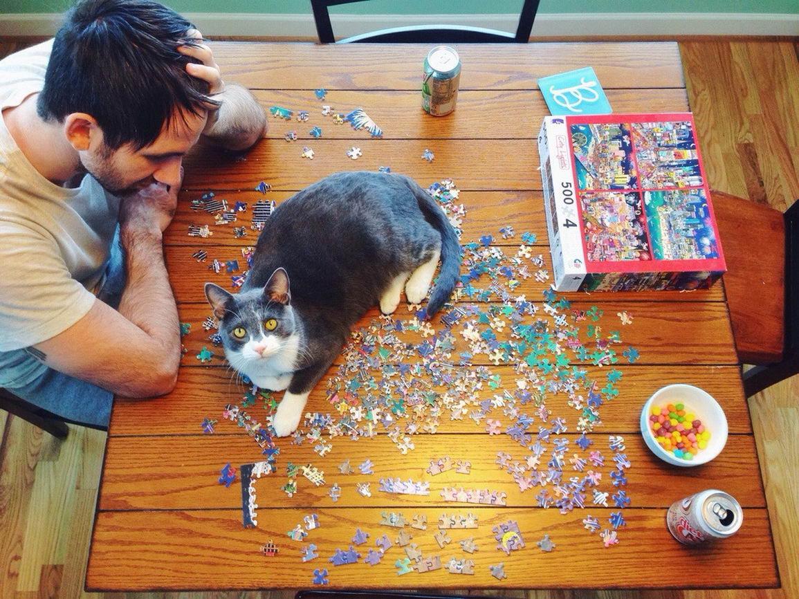 Puzzled Cat.jpg