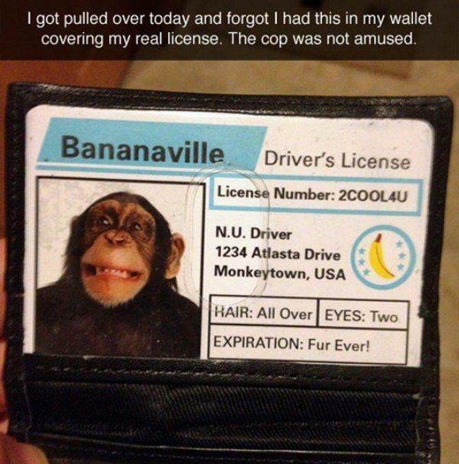 bananaville Driver's License.jpg