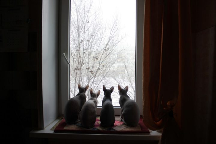 cat audience 720x480 cat audience