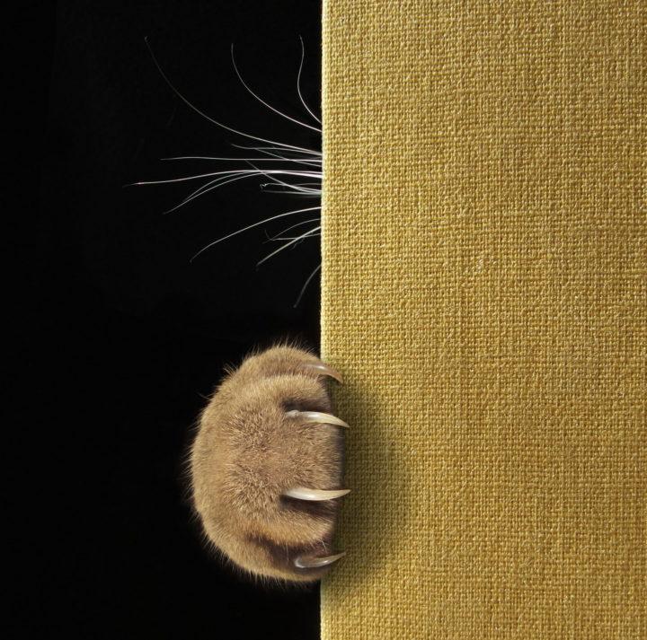 cat claw 720x713 cat claw