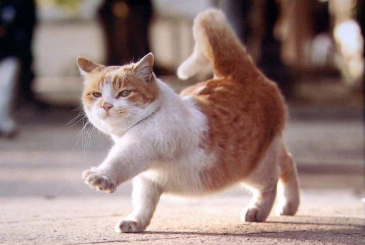 cat strut 720x483 cat strut
