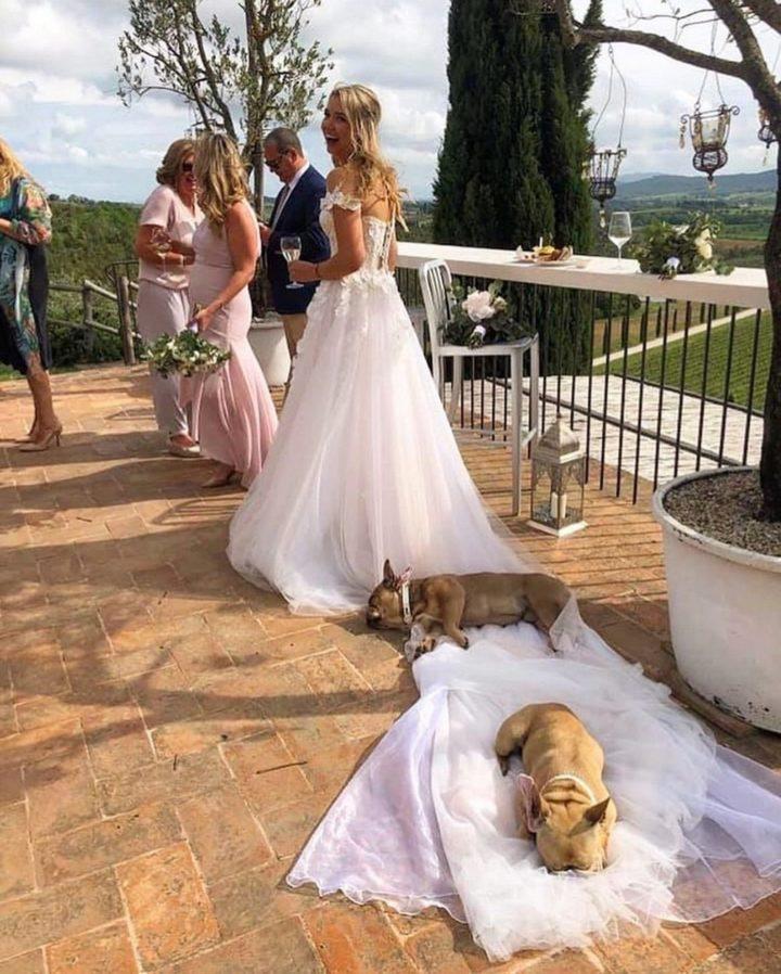 wedding dog beds 720x898 wedding dog beds