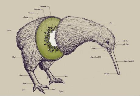 kiwi.jpg (19 KB)