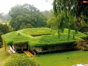 greenhouse.jpg (30 KB)