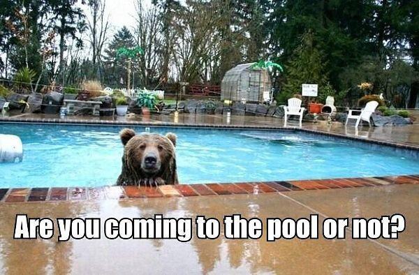 pool.jpg (60 KB)