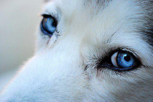 blue-eyes.jpg (30 KB)